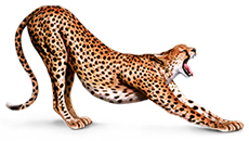 AdGraphics Cheetah